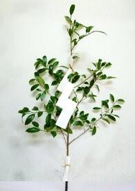 玉串と紙垂(しで)