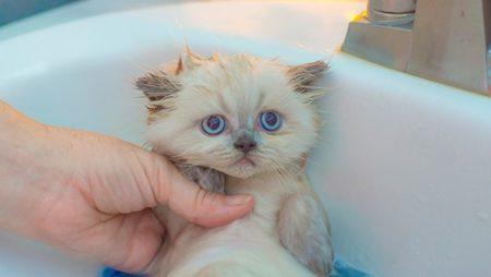 猫濡れるの嫌い