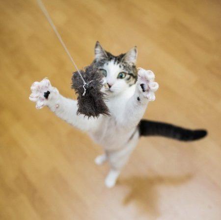猫動くものが好き